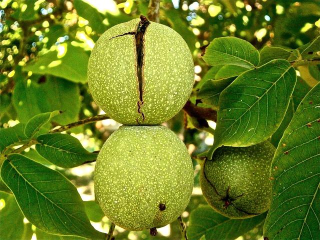 ořechy ve slupce