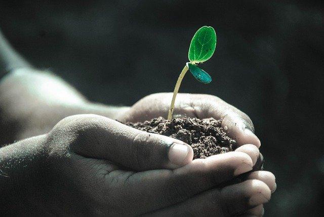 malý semenáček v dlani